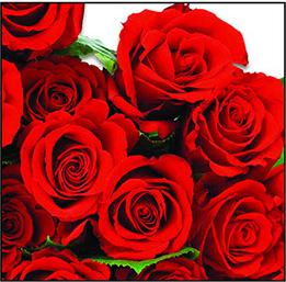 GUARDANAPO DE PAPEL 13307180 tulips